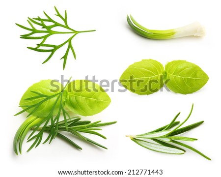 Basil leaves, dill, rosemary spice, onion isolated on white background. - stock photo
