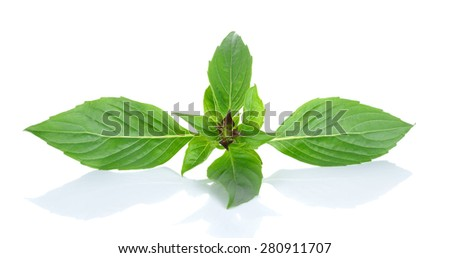 basil leaves isolated on the white background. - stock photo