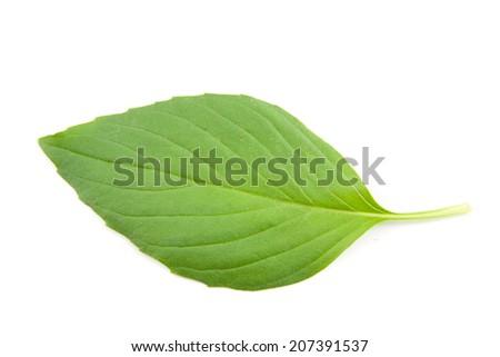 Basil leaves isolated  on white - stock photo