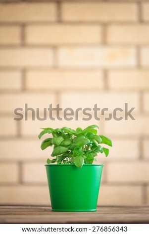 Basil plant in a pot - stock photo