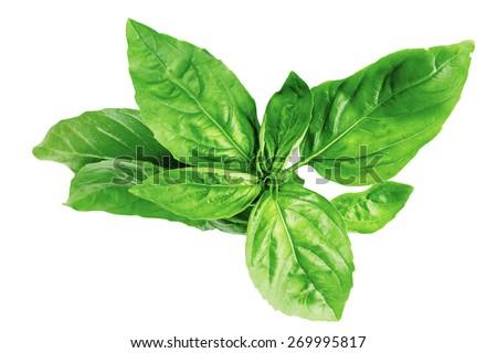 basil spice kitchen seasoning savory herbs useful - stock photo