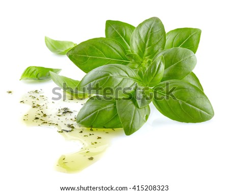 Basil with olive oil - stock photo