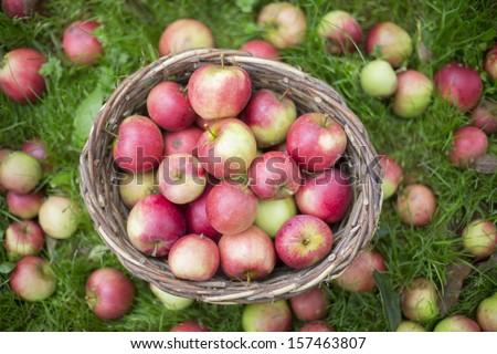 Basket Full Of Apples On Grass - stock photo