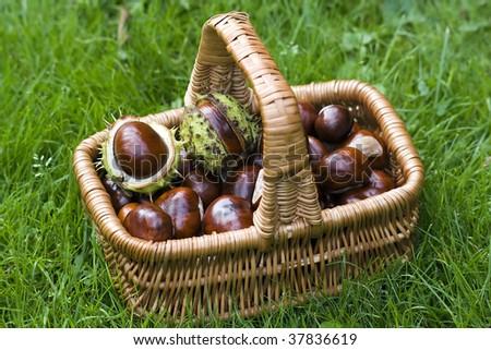 basket full of chestnuts - stock photo