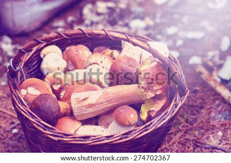 Basket full of different mushrooms isolated on a white background  with instagram effect retro vintage filter - stock photo