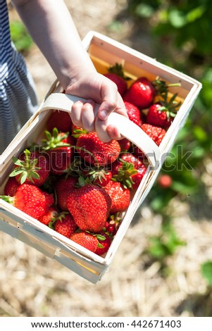 Basket full of strawberries held by a child's hand - stock photo