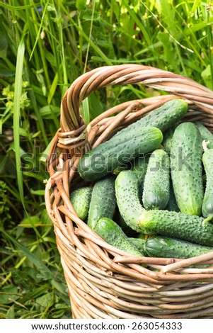 Basket of cucumbers on grass background cropped closeup - stock photo