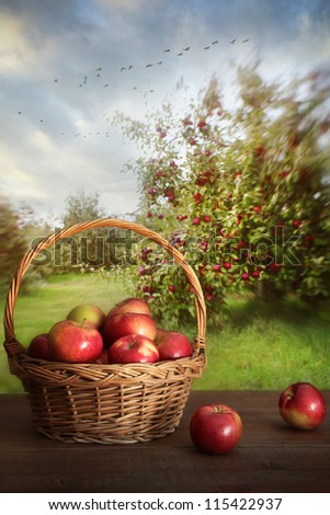 Basket of delicious apples on table in orchard - stock photo