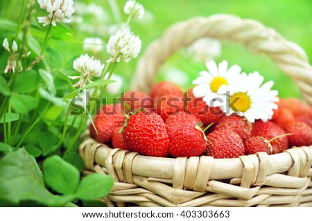 Basket of fresh ripe sweet strawberries on grass and clover background, selective focus - stock photo