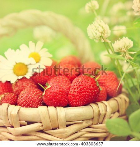 Basket of fresh ripe sweet strawberries on grass and clover background, selective focus, toned - stock photo