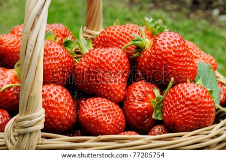 Basket of fresh strawberries - stock photo