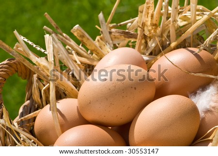 Basket of freshly laid free range eggs in outdoor setting - stock photo