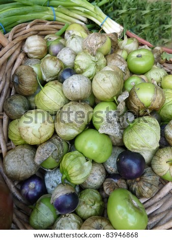 Basket of green and purple heirloom tomatoes - stock photo