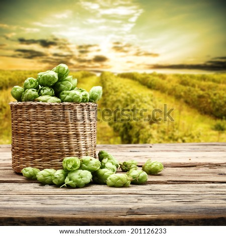 basket of hop and desk  - stock photo