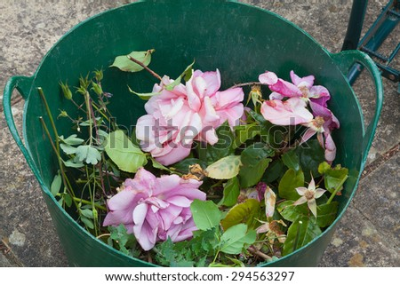 Basket of rose prunings from dead heading. - stock photo