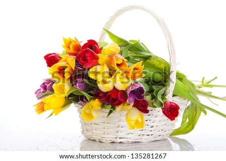 Basket of  Tulips isolated on white background. Bouquet of tulips in a basket - stock photo