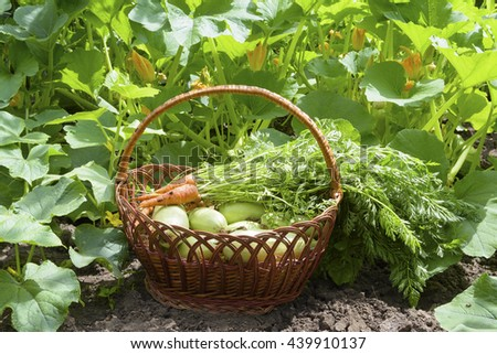 basket with a crop in the vegetable garden - stock photo