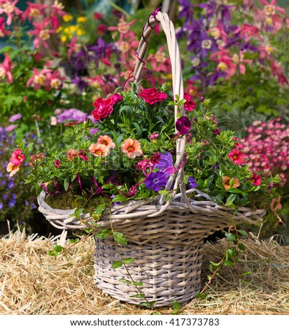 Basket with beautiful early flowering plants like petunia and dianthus on hey, with a colorful background. - stock photo