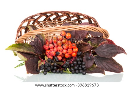 Basket with berries of mountain ash and elderberry isolated on white background. - stock photo
