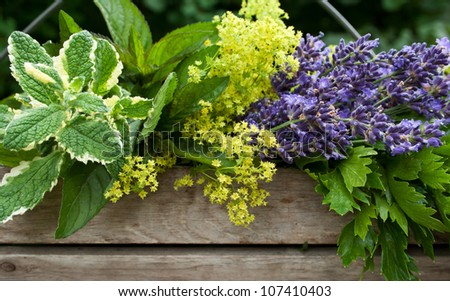 basket with herbs/herbs/summer - stock photo
