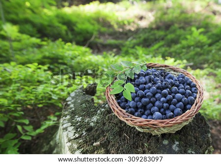 basket with organic blueberry,healthy food - stock photo
