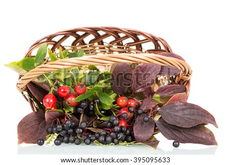 Basket with rose hips and berries elderberries isolated on white background. - stock photo
