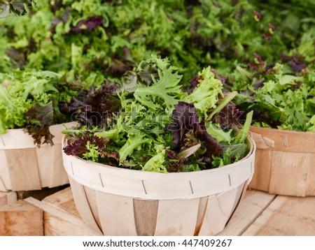 Baskets of fresh lettuce at farm market. - stock photo