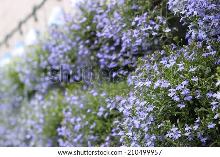 Baskets of purple flowers - stock photo