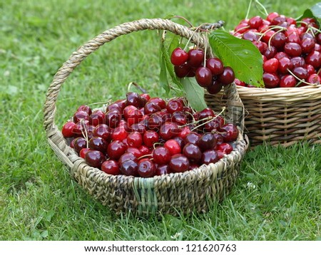 baskets with picked cherries - stock photo