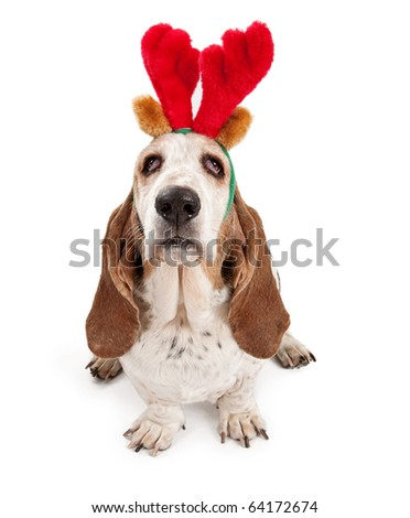 Basset Hound dog wearing reindeer antlers. Isolated on white. - stock photo