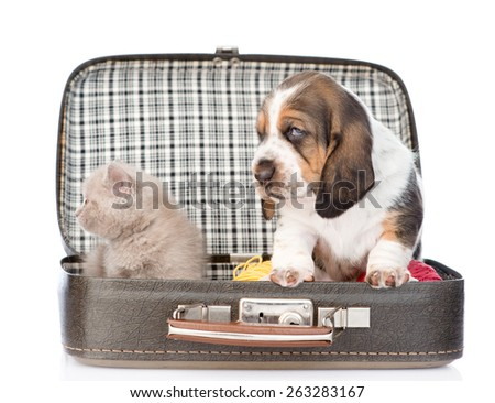 basset hound puppy and kitten sitting in a bag. isolated on white background - stock photo