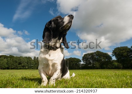 basset hound relaxing in the park - stock photo