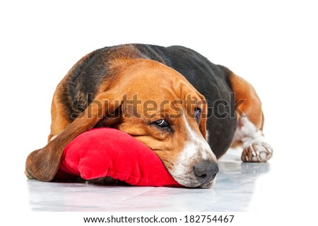 Basset hound sleeping on the pillow isolated on white background - stock photo