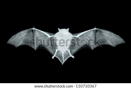 bat on the black background - stock photo