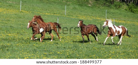 Batch of beautiful horses running on spring pasturage - stock photo