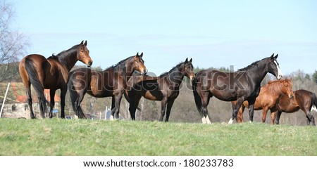 Batch of horses standing together on pasturage - stock photo