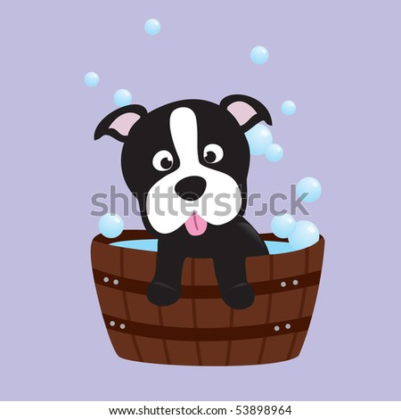 bath-time terrier pup - stock photo
