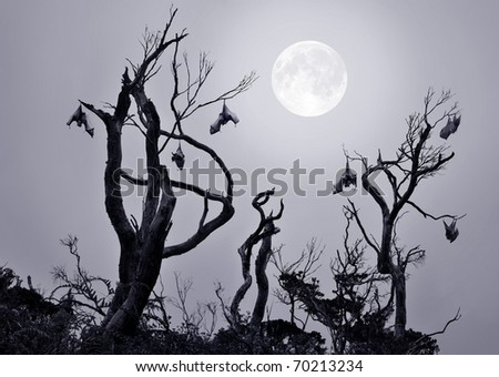 Bats in gnarled trees with full moon background in a scary and spooky scene as Halloween theme. - stock photo