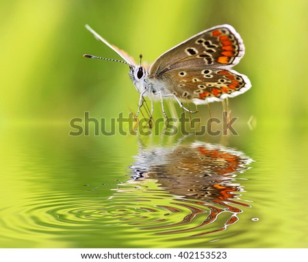 batterfly in the river - stock photo