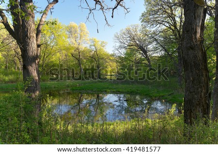 battle creek regional park of saint paul minnesota along trail and pond through forest during fresh greenery of spring - stock photo