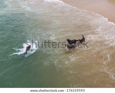 Battle of dogs with a sea lion on the beach near the fishing port in Valparaiso - Chile - stock photo