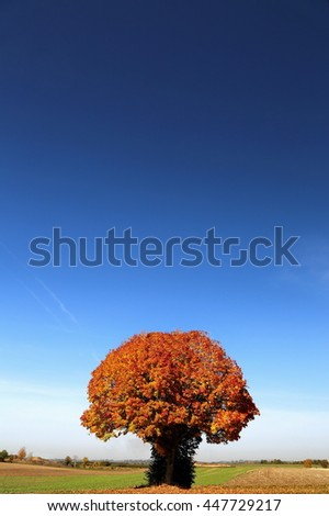 Baum - stock photo