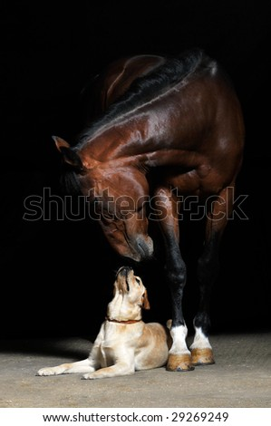 bay horse and dog on the black background - stock photo