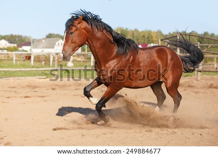 Bay horse playing and freaking out in the paddock. - stock photo