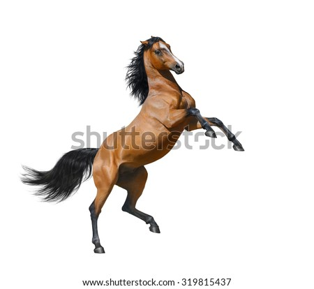 Bay horse rearing - isolated on a white background - stock photo