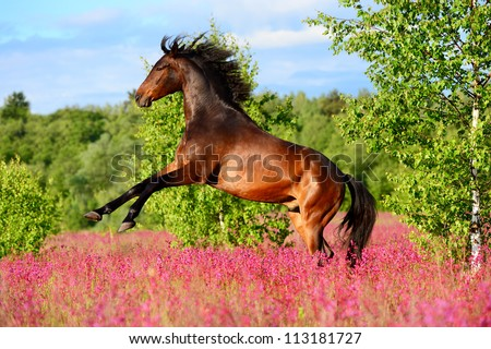 Bay horse rearing up on the pink flowers in summer time - stock photo