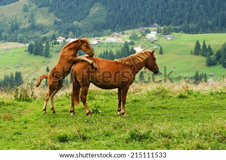 Bay horse with foal playing in the mountains at sunset, amazing hipster natural background - stock photo