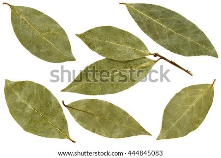Bay leaf isolated on white background. Macro. - stock photo