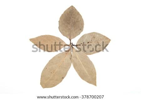 Bay Leaves isolated on white background - stock photo