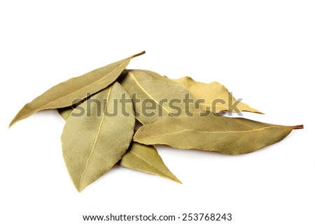 Bay leaves on white background  - stock photo